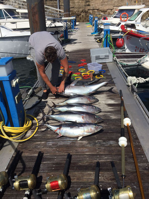 pesca de bonito en asturias